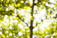 Hintergrund Bokeh von der Sonne unter dem Schatten von Bäumen Stockbilder