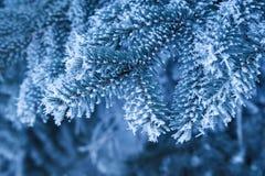 Hintergrund, den die schönen schneebedeckten Niederlassungen von gezierten Bäumen im Winter parken Stockfotos