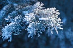 Hintergrund, den die schönen schneebedeckten Niederlassungen von gezierten Bäumen im Winter parken Lizenzfreie Stockbilder
