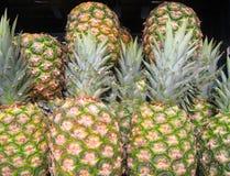 Hintergrund der Ananas (Ananas comosus). Lizenzfreie Stockfotos