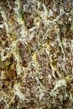 Hintergrund der Barke eines Baums, alte Barke Nahaufnahme Lizenzfreies Stockbild