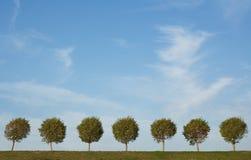 Hintergrund der Baumgasse und des blauen Himmels Lizenzfreies Stockfoto