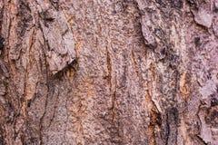 Hintergrund der Baumrindebeschaffenheit Stockfotos