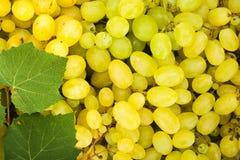 Hintergrund der Beeren der weißen Traube (Vitis) Stockfotos