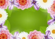 Hintergrund der Blumen Stockfotos