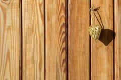 Hintergrund der braunen hölzernen Planke Lizenzfreie Stockbilder