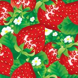 Hintergrund der Erdbeere Stockfoto