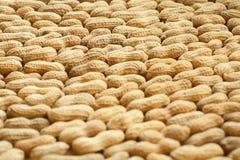 Hintergrund der Erdnuss lizenzfreies stockfoto