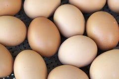 Hintergrund der frischen Eier Stockbild