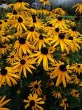 Hintergrund der gelben Blumen stockfoto