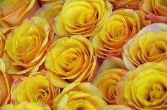 Hintergrund der gelben Rosen Stockfoto