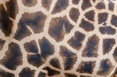 Hintergrund der Giraffe Lizenzfreie Stockbilder