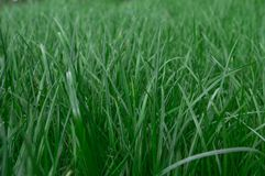 Hintergrund der grünen Rasennahaufnahme lizenzfreies stockbild