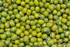Hintergrund der grünen Bohne oder der Mungobohne. Stockfoto