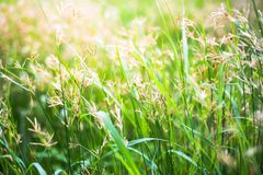Hintergrund der Grasblume lizenzfreies stockbild