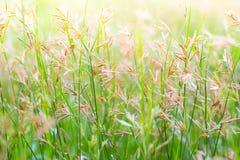 Hintergrund der Grasblume stockfoto