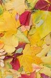 Hintergrund der Herbstblätter Stockfoto