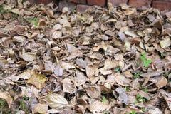 Hintergrund der Herbstblätter Stockbild