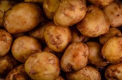 Hintergrund der jungen Kartoffel Lizenzfreie Stockfotografie