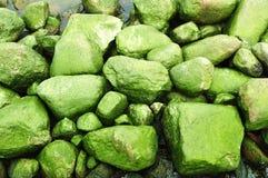 Hintergrund der moosigen Seesteine stockbild