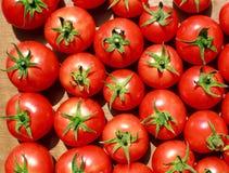 Hintergrund der natürlichen Tomaten Stockfotografie