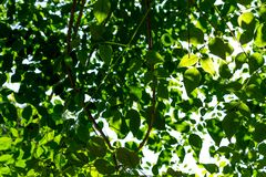 Hintergrund der Natur lizenzfreie stockbilder