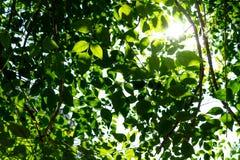 Hintergrund der Natur stockfoto