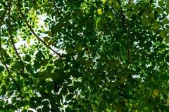 Hintergrund der Natur lizenzfreies stockbild