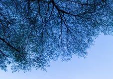 Hintergrund der Niederlassungen der Bäume gegen den blauen Himmel Stockfotos