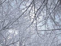 Hintergrund der Niederlassungen im Schnee des dunklen Winterwaldes Lizenzfreies Stockbild