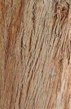 Hintergrund der Palmen-Baumrinde Lizenzfreie Stockfotos