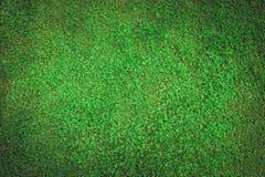 Hintergrund der Rasenfläche mit Klee Stockfotografie