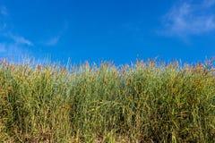 Hintergrund der Rasenfläche und des blauen Himmels Stockfotografie