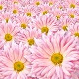 Hintergrund der rosafarbenen Blumen stockfoto