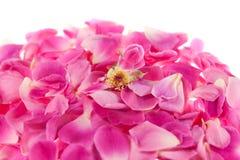 Hintergrund der rosafarbenen Blumenblätter stockbilder