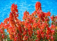 Hintergrund der roten Blumen Lizenzfreies Stockbild