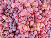 Hintergrund der roten Trauben Stockbilder