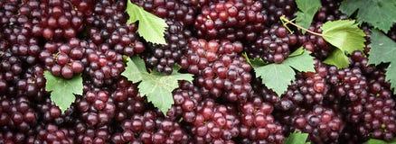 Hintergrund der roten Trauben Stockfoto