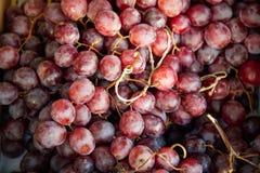 Hintergrund der roten Trauben, dunkle Trauben Stockfotografie