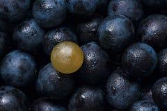 Hintergrund der roten Weinreben, dunkle Trauben, blaue Trauben Lizenzfreies Stockbild