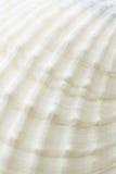 Hintergrund der Seeshell-Oberflächenbeschaffenheit Lizenzfreie Stockbilder