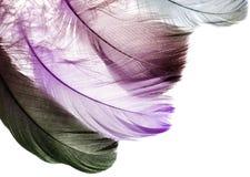 Hintergrund der vielen schönen natürlichen Vogelfedern Lizenzfreie Stockfotos