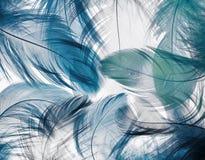 Hintergrund der vielen schönen natürlichen Vogelfedern von vario Stockfoto