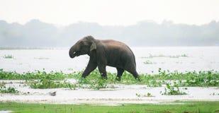Hintergrund der wild lebenden Tiere Stockfoto