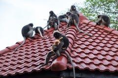 Hintergrund der wild lebenden Tiere mit Affen und Baby albern auf die Dachoberseite herum Im Stockfoto