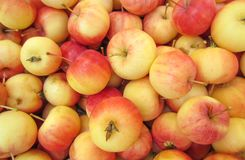 Hintergrund der wilden Äpfel Stockfotografie