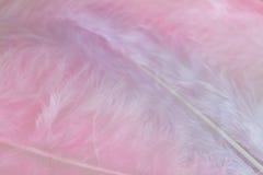 Hintergrund des Abschlusses herauf Bild des Pastellrosas versieht mit Federn Stockfotos
