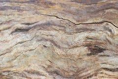 Hintergrund des alten gebrochenen Stammes des verwelkten Baums ohne Barke Stockbilder