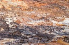 Hintergrund des alten Stammes des verwelkten Baums verdunkelte sich mit Zeit Lizenzfreie Stockfotos