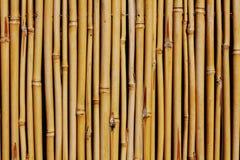 Hintergrund des Bambuszauns Stockbilder